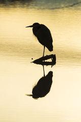 B0058, silhouette