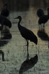 B0059, silhouette