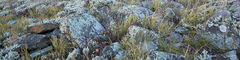 Lichens and Grass