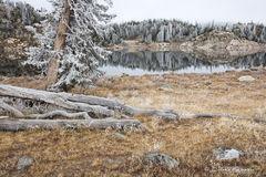 Frosty Reflection