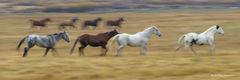 L0102, late for dinner, horses