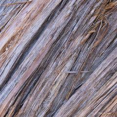 L0119, tree bark, texture