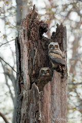 R0022, owl