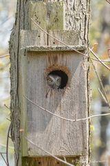 R0023, owl