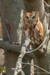 R0024, owl