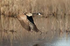 Cruising the Marsh