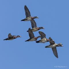 W0103, flock