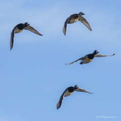 W0104, flock