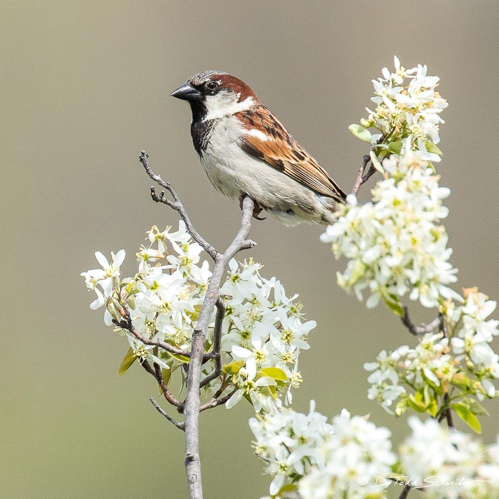 B0017, sparrow, photo