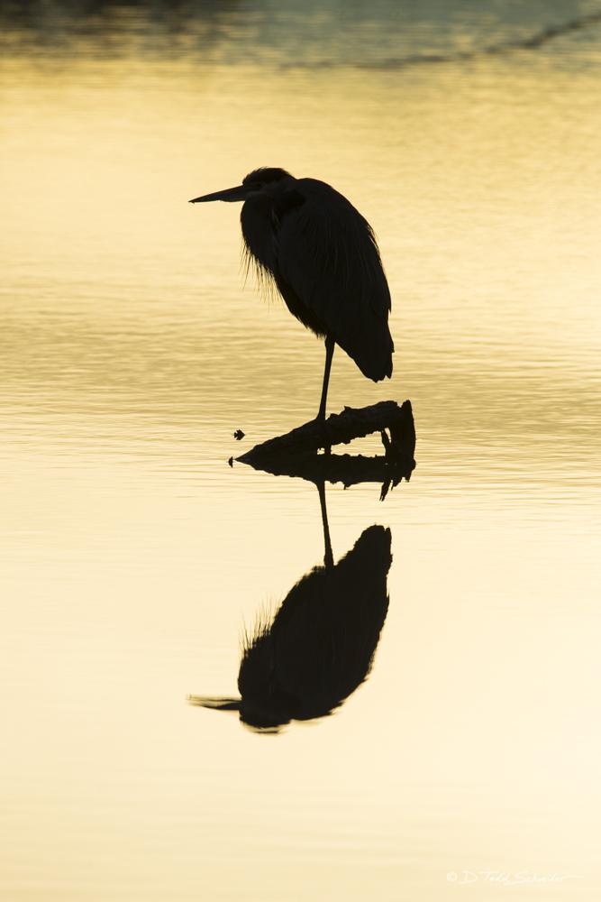 B0058, silhouette, photo
