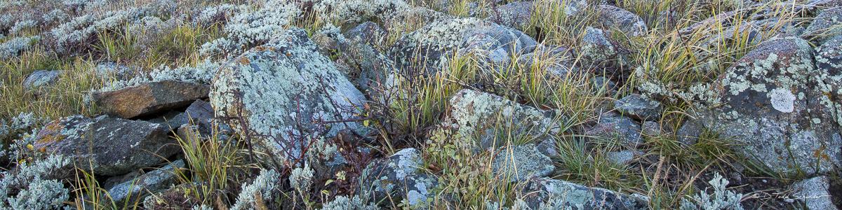 L0009, Utah, Signature-Series, Lichens and Grass, grass, lichens, photo