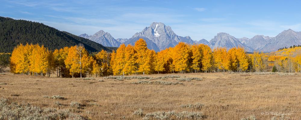 L0057, Wyoming, Aspens Aglow, photo