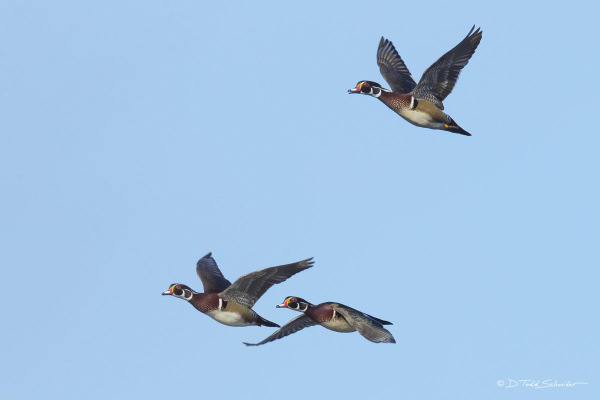 W0097, flock, photo