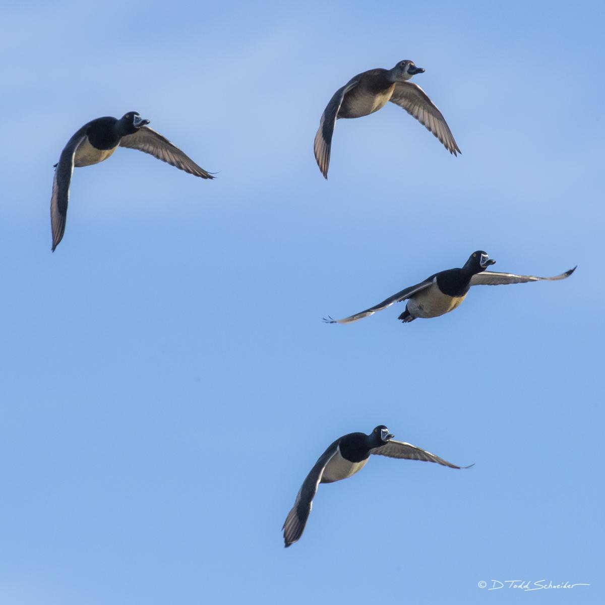 W0104, flock, photo